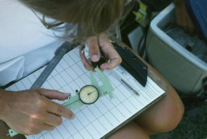 How long is the swallow's bill? Brown and his colleagues measure beak length with a caliper.