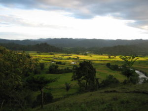 Rice paddies and, on the left, clove agroforests in Madagascar