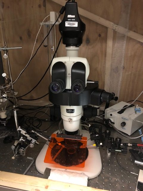 A microscope that Neurochemist Jill Venton uses in her lab.